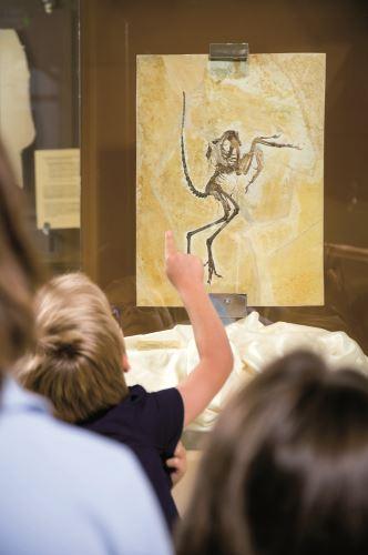 Beeindruckt sind die Kinder im Naturpark Altmühltal von den gefundenen Fossilien. Ein Liebling ist der Archaeopteryx. Foto:(c) Naturpark Altmühltal