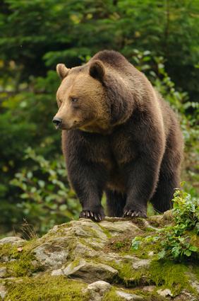 Bärig gut geht es den Bären im alternativen Bärenpark Worbis (Thüringen). Hier gibt es auch tolle Outdoor-Veranstaltungen für Kinder. Foto: © Julius Kramer - Fotolia.com