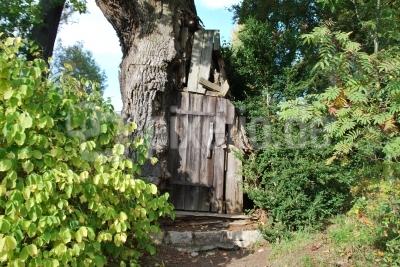 Ein Baumhaus auf der Pfaueninsel weckt in den Kindern den Abenteuergeist! Foto: Uwe Wattenberg  / pixelio.de