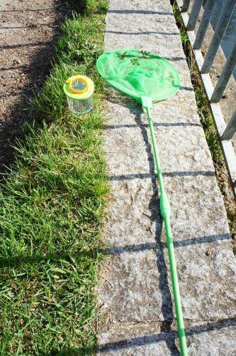 Hier ist unsere Ausrüstung um einen Wasserläufer zu fangen: Kescher und Becherlupenglas. Foto: (c) Kinderoutdoor.de