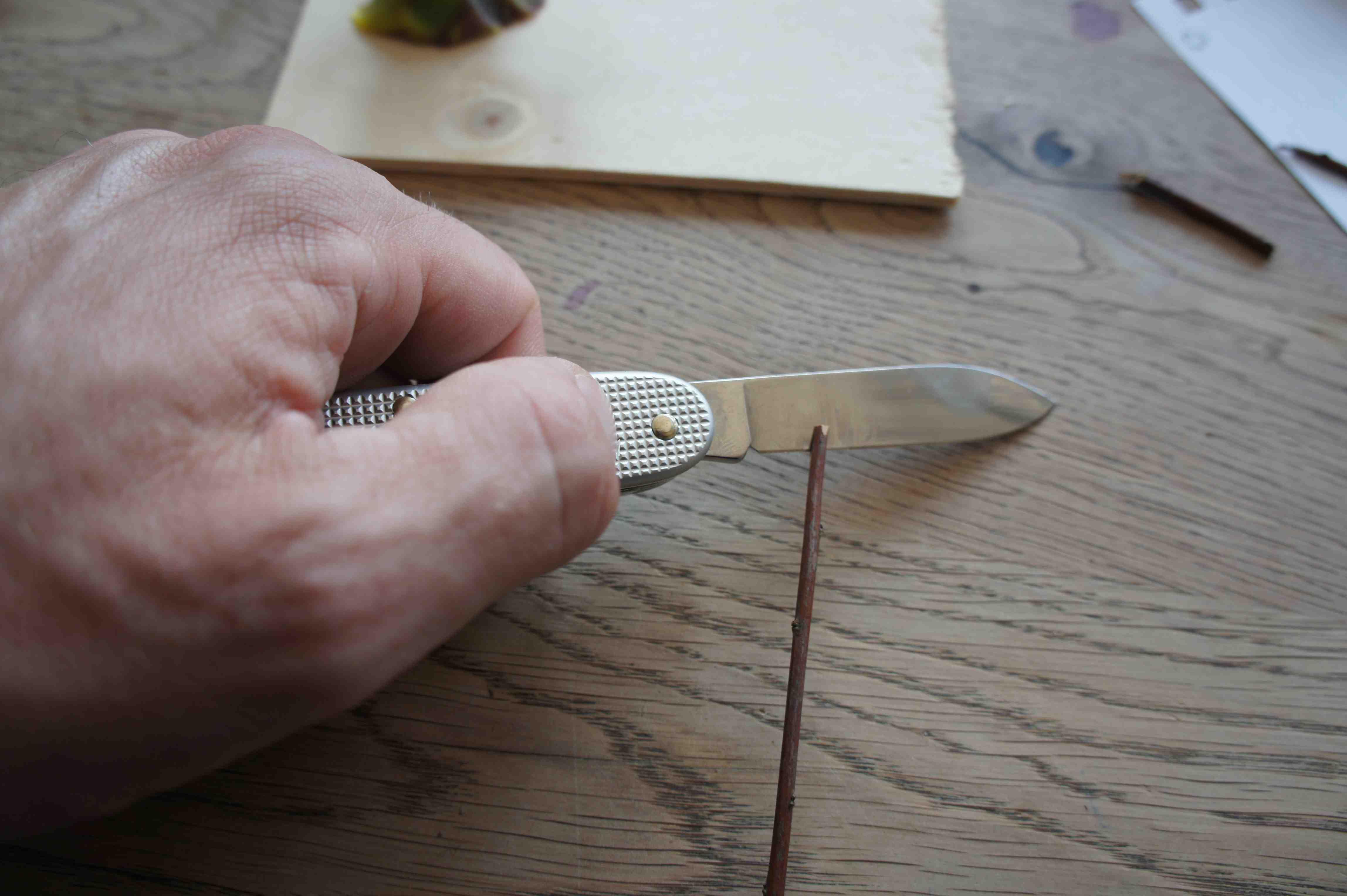 Vorsichtig schneidet Ihr an einem Ende den dünnen Zweig ungefähr fünf Millimeter ein. Foto: (c) Kinderoutdoor.de