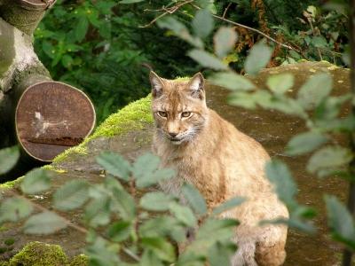 Stellt mal die Ohren auf: Im Heimat-Tierpark Olderdissen (Bielefeld) könnt Ihr kostenlos Tiere aus nächster Nähe beobachten. Foto: Karl-Heinz Schack  / pixelio.de