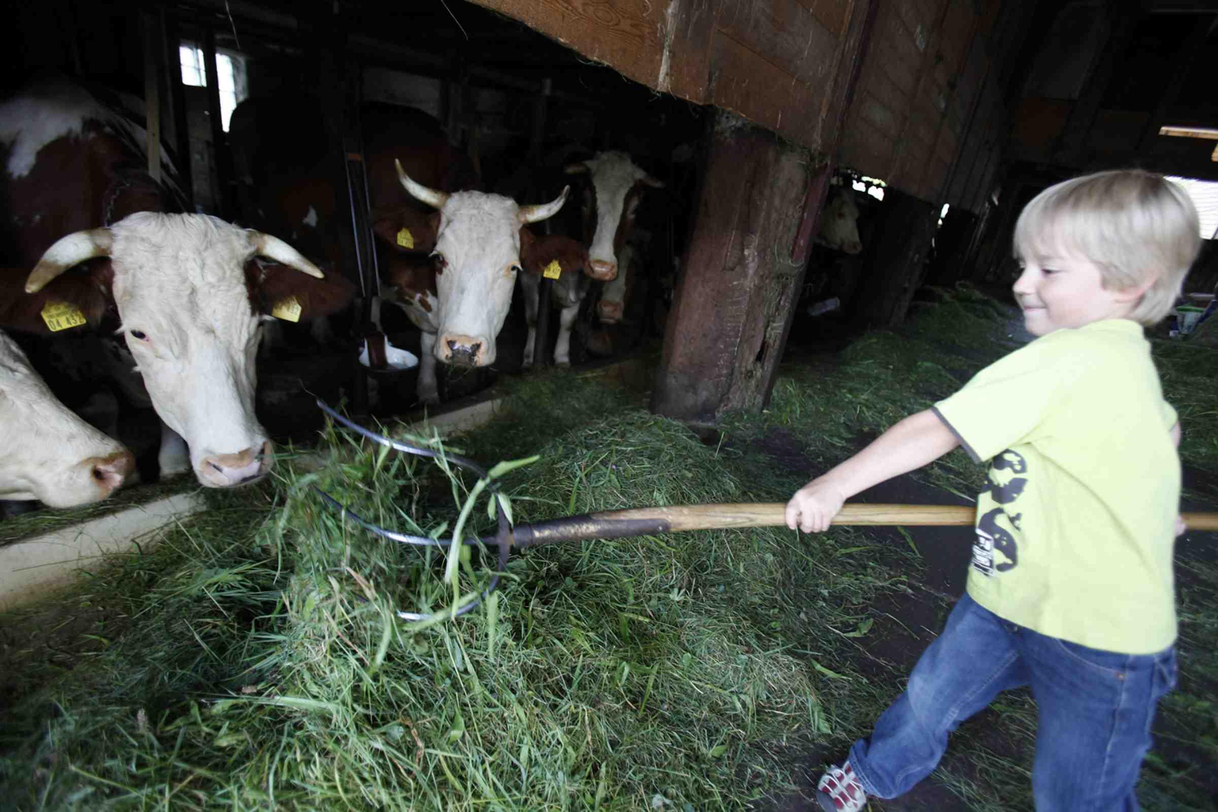 In Baiersbronn gibt es für Outdoor Kinder genügend Möglichkeiten einen Bauernhof zu erkunden. Dann wissen die Kleinen, dass die Milch nicht aus dem Supermarkt kommt, sondern von der Kuh.... Copyright: Baiersbronn Touristik