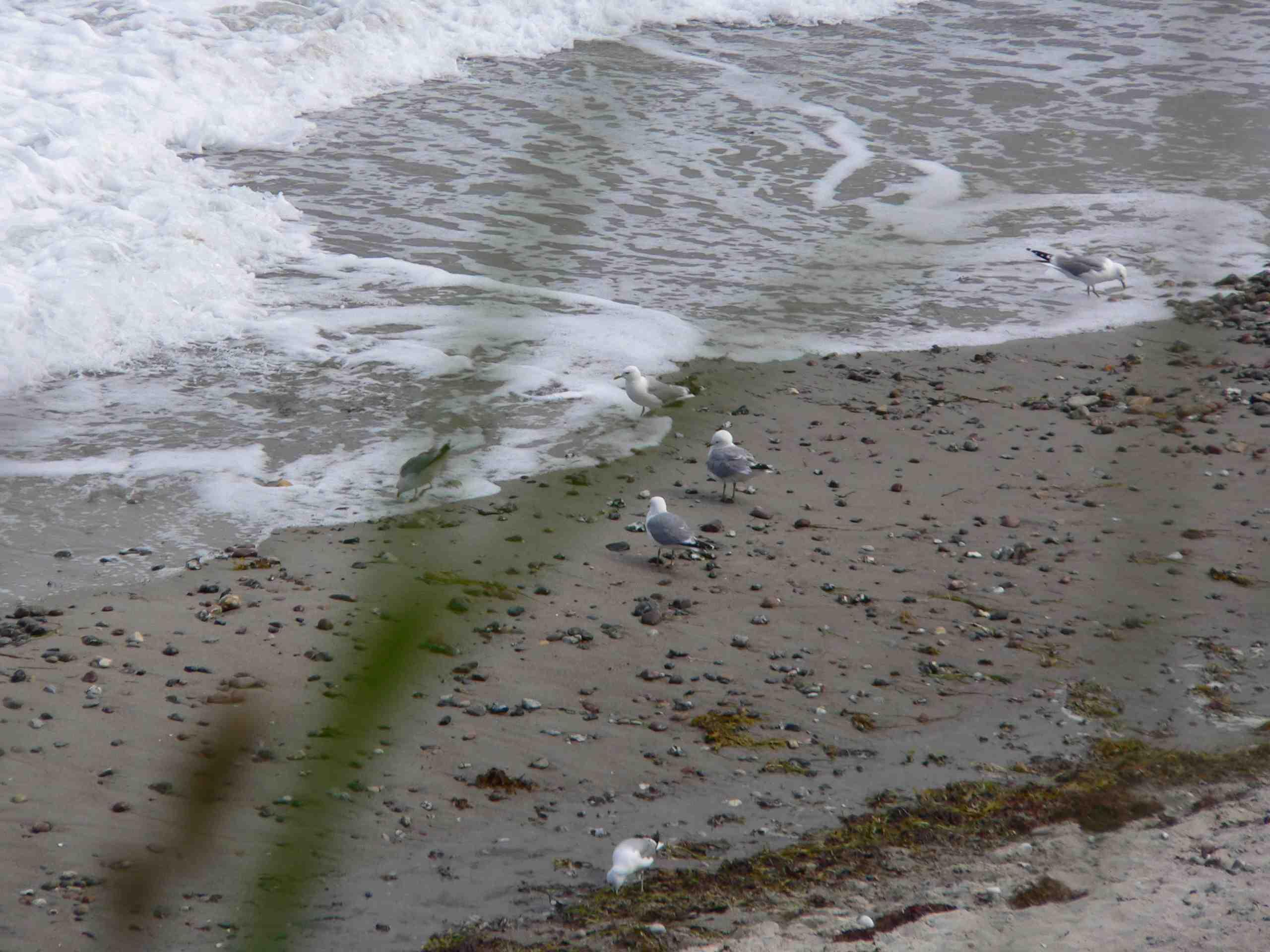 Eine typische Strandszene auf Fehmarn im Früjahr.  Foto: (c) Kinderoutdoor.de