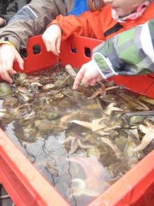 Kuck mal was da alles im Netz ist! Outdoor Kinder schauen sich an, was alles in der Nordsee schwimmt. Foto.(c) Kinderoutdoor.de