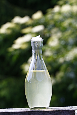 Leuchtendes Weißgold in der Flasche! Mit wenig Aufwand könnt Ihr den Holundersirup selber machen. Foto: günther gumhold  / pixelio.de
