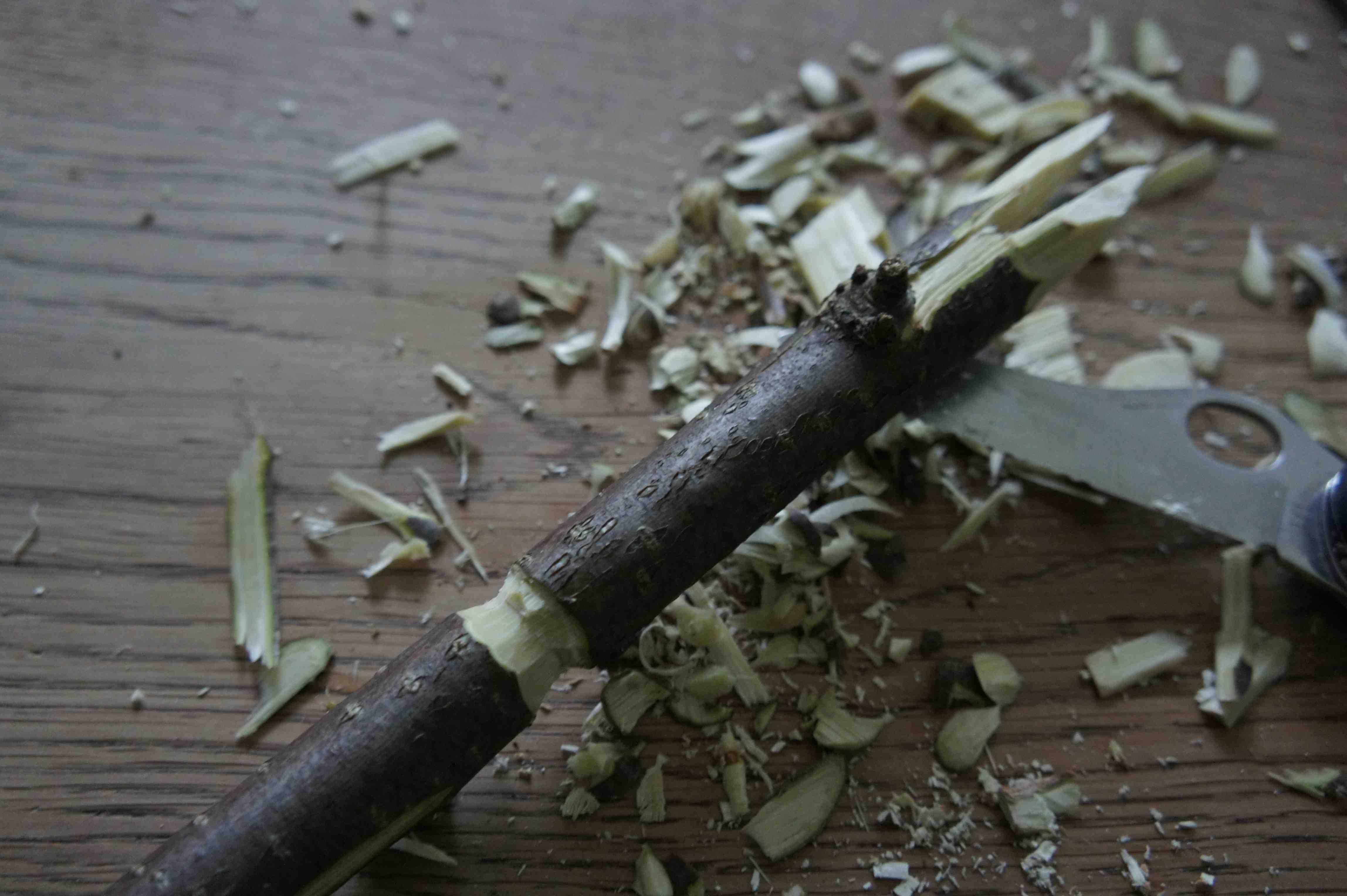Nun kerbt Ihr unterhalb der Gabel mit dem Taschenmesser den Zweig rundum ein. Foto: (c) Kinderoutdoor.de