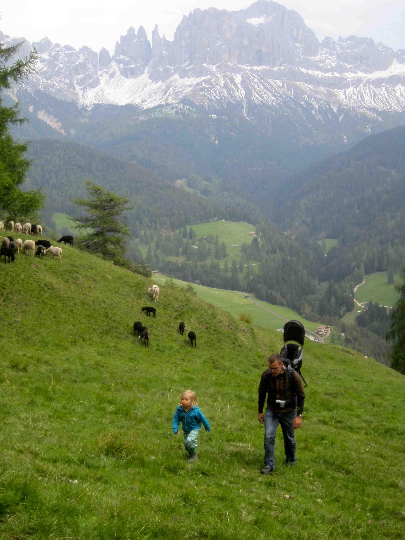 Kinder Wanderschuhe im Test: Zwischen Schafen, Lärchen und einem grandiosen Panorama.  Foto: (c) Kinderoutdoor.de