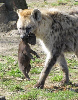 Mama packt zu! Im Tierpark Berlin können Outdoor Kinder den flächenmäßig größten Zoo Europas erkunden. Foto: (c) Rolf Handke  / pixelio.de