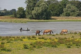 Urlaub in Brandenburg ist nach dem Hochwasser wieder nahezu uneingeschränkt möglich. Foto: (c) TMB Fotoarchiv Silbermann