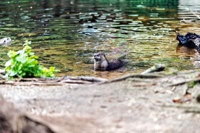 Otter bleiben wir hier länger? Im Otterzentrum Hankensbüttel vergeht die Zeit wie im Flug! Foto: Ich-und-Du  / pixelio.de