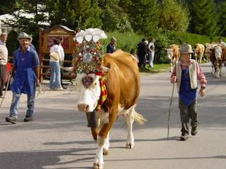 Einen feierlichen Almabtrieb in Sankt Vigil könnt Ihr in Südtirol sehen. Foto:(c) Kronplatz/ Südtirol/