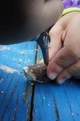 Bohrt nun in die Unterseite vom Giraffenkopf ein Loch. Darin wird später der Hals eingesteckt.  Foto: (c) Kinderoutdoor.de