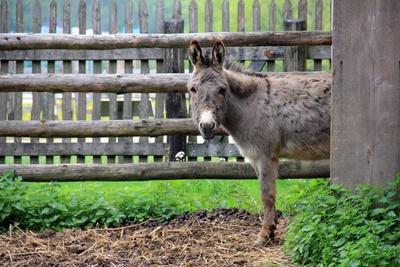 Am Vogelsberg gibt es Wanderungen mit Eseln oder Lamas und ein erloschener Vulkan ist auch dabei. Foto:(c) Anna Rosin  / pixelio.de