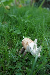 Heute schnitzen wir ein Nashorn. Für kleine Holzschnitzer ab acht Jahren ist diese Bastelei geeignet. Foto: (c) Kinderoutdoor.de