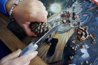 An den Zapfen Teil II: Nun die Unterseite vom Zapfen flach abschneiden, damit der Kastanienzwerg frei stehen kann.  Foto:(c) Kinderoutdoor.de