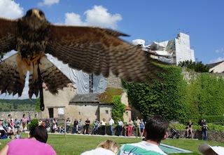 Kommt ein Vogel geflogen! Auf der Rosenburg können die Outdoorkinder viele schöne Greifvögel bestaunen. Foto: (c) Kinderoutdoor.de