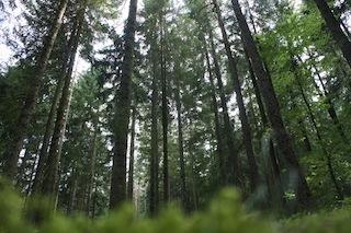 Bei unserer Schnitzeljagd Tiere im Wald, sind die Kinder mit Kreativität, Kraft und Geschicklichkeit gefordert. Foto: (c) Kinderoutdoor.de