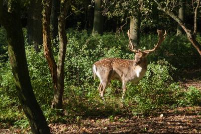 Damild und weitere Tierarten lassen sich im Wildpark Silz beobachten. Foto: (c) Dieter Hopf  / pixelio.de