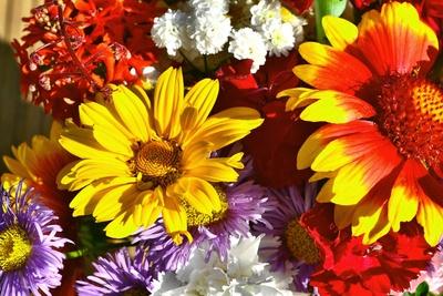 Wir verlosen zum Oma Tag in Kooperation mit Blume 2000 einen Strauß im Wert von 30 €.  Foto: (c) Andreas Hermsdorf  / pixelio.de