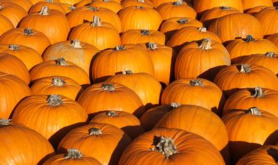 Herbst ist Zeit für Kürbisse! Wir stellen Euch heute das Rezept für Kürbis-Risotto vor. Foto: (c) lichtkunst.73  / pixelio.de