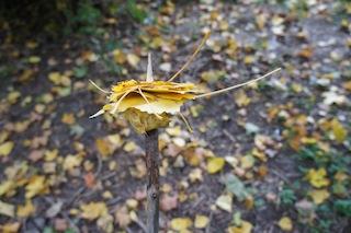 Flott geht es bei der Schnitzeljagd zu wenn es ans Laubspießen geht.  Foto: (c) kinderoutdoor.de