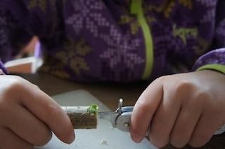 Bei unserer Kastanien-Bastelei erst einmal das Mark aus dem Hollunder kratzen.  Foto: (c) kinderoutdoor.de