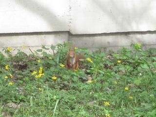 Ein Quiz gehört zu jeder guten Schnitzeljagd, wie der Winterschlaf zum Eichhörnchen.  Foto: (c) Kinderoutdoor.de