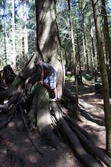 Im Bayerischen Wald gibt es am Sonnenwald einen neuen Walderlebnispfad! Foto: (c) Kinderoutdoor.de