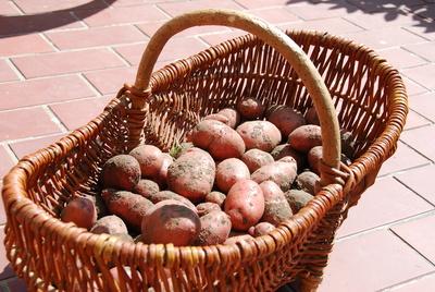 Rezepte mit Kartoffeln sind vielfältig: Von deftig bis raffiniert.   Foto: (c) as  / pixelio.de