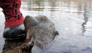 Wie die meisten Kamik Kinderhschuhe ist der Scarlet J 2 wasserdicht. Foto: (c) Kinderoutdoor.de