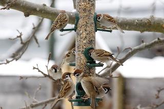 Vögel füttern im Winter geht am besten mit einem Futtersilo, raten die Experten vom LBV. © Landesbund für Vogelschutz in Bayern e.V. zum Anfang; Ingo Rittscher