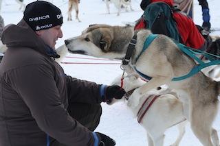 """Schlittenhunde wollen Action! """"Komm schon Jong, auf geht´s!  Foto (c) Steffen"""