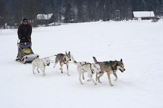Haltungsnote Eins! Steffen hat seine vier Schlittenhunde richtig gut im Griff, oder umgekehrt? Foto (c) Steffen
