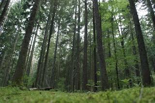 Bei einer Schnitzeljagd im Wald müsst Ihr so gut wie nichts mitnehmen: Es ist alles schon da! Foto (c) Kinderoutdoor.de