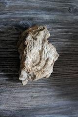 Fossilien mit Kinder präparieren ist hochspannend! Foto (c) Kinderoutdoor.de