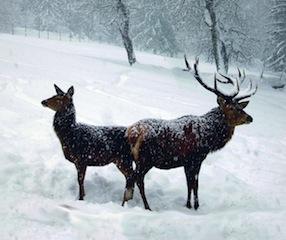 Im Nationalpark zu den Hirschen pirschen.  Foto (c) NPV Bayerischer Wald