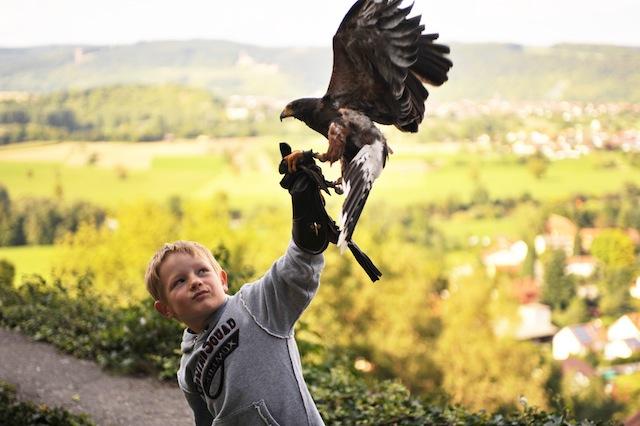 Greifvögel ganz nah auf der Deutschen Greifvogelwarte Burg Guttenberg.  Foto (c) Deutsche Greifvogelwarte Burg Guttenberg