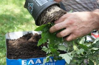 Pflanzzeit! Rein mit der Tomate in unser Upcycling Projekt.  Foto (c) Kinderoutdoor.de