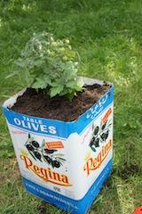 Fertig ist unser stylischer Pflanzkübel! Upcycling kann ganz einfach sein.  Foto (c) Kinderoutdoor.de
