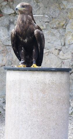 Kein Rabe, sondern ein Adler. Diese und andere Greifvögel seht Ihr auf Burg Rabenstein in Franken fliegen.  Foto (c) Kinderoutdoor.de