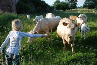 Der Klassiker beim Urlaub auf dem Bauernhof: Kühe!  Foto: Ferienhof Hafflandsichten, Fam. Pussehl, Dargen/Usedom