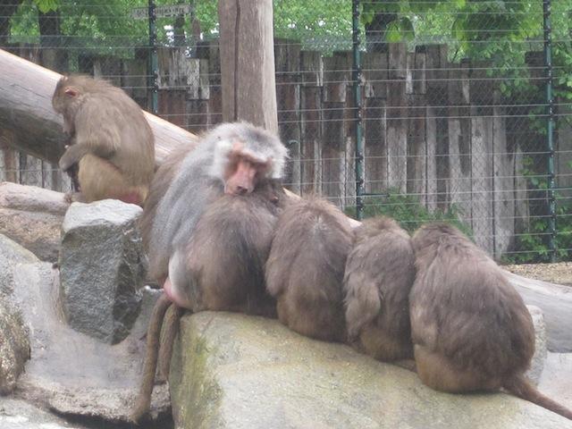 Guts Nächtle! Die Affen schlafen schon, wenn die Nachtführung im Zoo losgeht. Foto (c) Kinderoutdoor.de