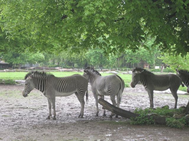 Streifen-Pyjamas kommen nie aus der Mode! Gute Nacht im Zoo! Foto (c) Kinderoutdoor.de