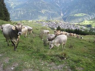 Familienurlaub in Tirol: Geocaching motiviert die Kinder zum Wandern.  Foto (c) Kinderoutdoor.de