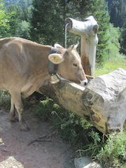 Nur ein Rindvieh trinkt beim Wandern zu wenig! Foto (c) Kinderoutdoor.de