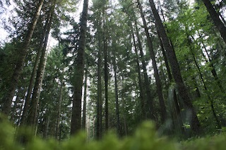 Im Urwald vom Saarland unterwegs: 8,2 Kilometer voller Überraschungen! Foto (c) Kinderoutdoor.de