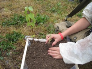 Nun den Minigarten bepflanzen.  Foto (c) Kinderoutdoor.de