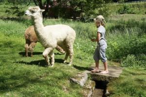 Lama wandern in Hessen. Mit den gutmütigen Tieren die Vulkane von Hessen erkunden.  foto (c) kinderoutdoor.de