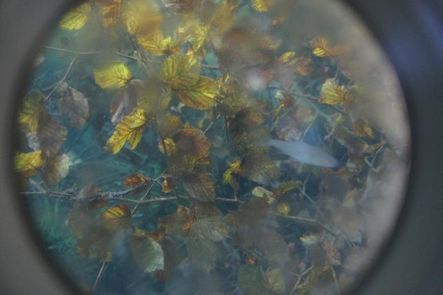 Spektakulär war Ihr Unterwasser alles zu sehen bekommt! Foto (c) Kinderoutdoor.de